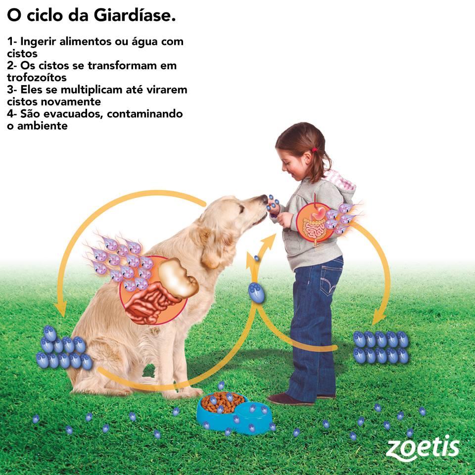 Vacina da giardia zoetis - Giardiavax vacina Vakcina giardia zoetis